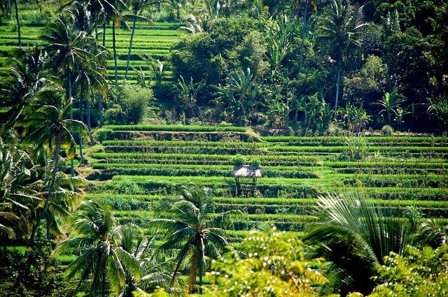 Découvrir l'île de Bali côté Nature