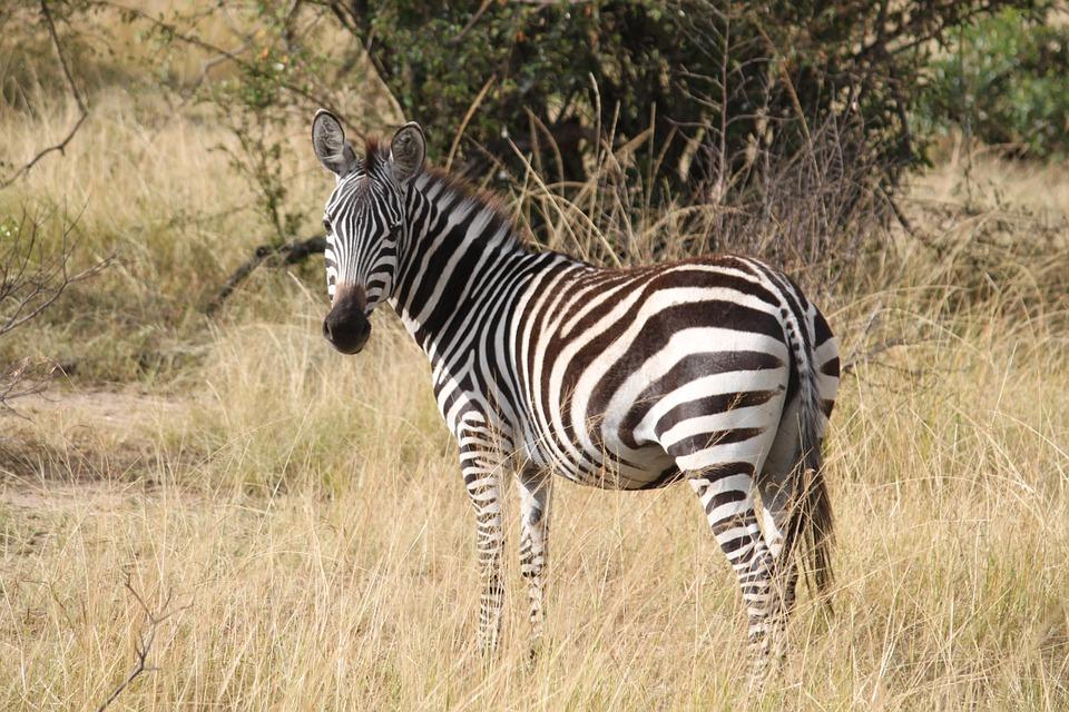 Le ronjo camp : hébergement connu au Serengeti