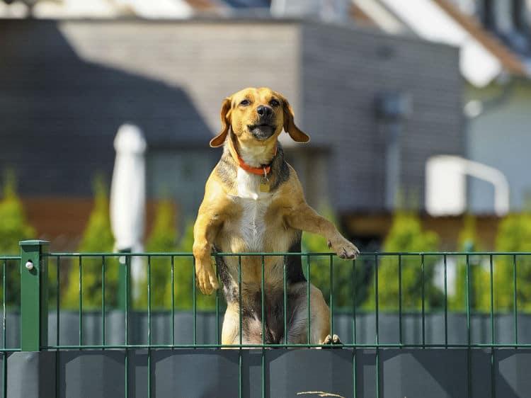 Le collier de dressage serait-il utile pour lutter contre la fugue d'un chien ?